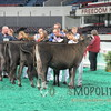 NAILE15-Open-Jersey-Hfr-IMG_0413