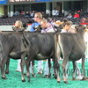 NAILE15-Open-Jersey-Hfr-IMG_0415