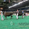 NAILE15-Open-Jersey-Hfr-IMG_0430