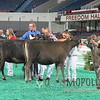 NAILE15-Open-Jersey-Hfr-IMG_0409