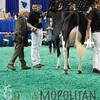 NAILE15-Jr-HolsteinsDSCN9148