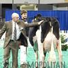 NAILE15-Jr-HolsteinsDSCN9146