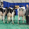 NAILE15-Open-Holstein-CowsDSCN9839