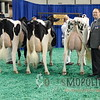 NAILE15-Open-Holstein-CowsDSCN9840
