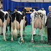 NAILE15-Open-Holstein-CowsDSCN9838