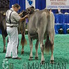 NAILE15-Open-BrownSwiss-HfrDSCN0207
