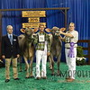 NAILE15-Open-BrownSwiss-HfrDSCN0209