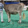 NAILE15-Open-BrownSwiss-HfrDSCN0204