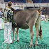 NAILE15-Open-BrownSwiss-HfrDSCN0205