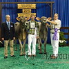NAILE15-Open-BrownSwiss-HfrDSCN0210