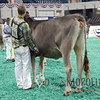 NAILE15-Open-BrownSwiss-HfrDSCN0206