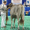 NAILE15-Open-BrownSwiss-HfrDSCN0208