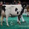 NAILE15-Jr-AyrshireDSCN9427