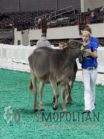 Southeast National Junior Brown Swiss Show 2015
