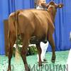 NAILE15-Open-MilkingShorthornDSCN8347