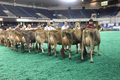 All-American Jersey Intermediate Cow Show 2016