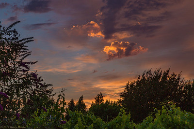 Sonoma Sunset in June