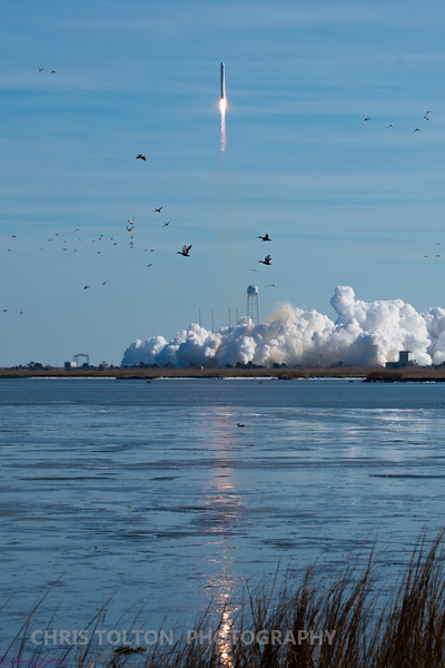 Birds Take Flight at Wallops