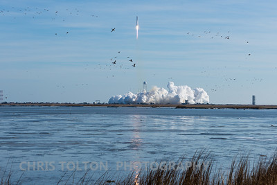 Cygnus and Other Waterfowl Take Flight