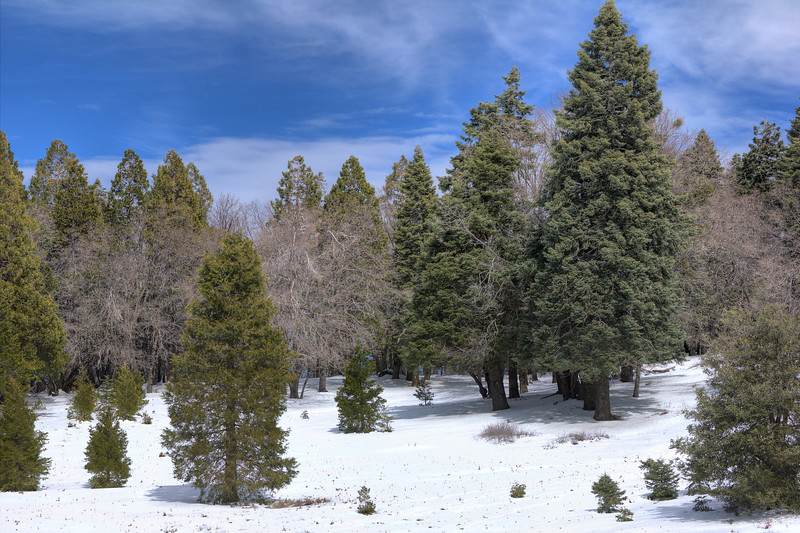 Snow dusting, Palomar Mountain