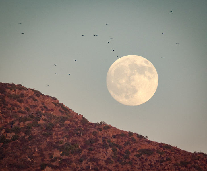Full Moon and Crows, Rancho Bernardo