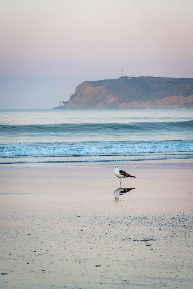 Seagull, Coronado