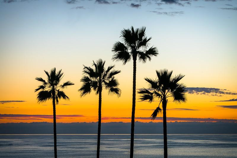 Scripps Palms
