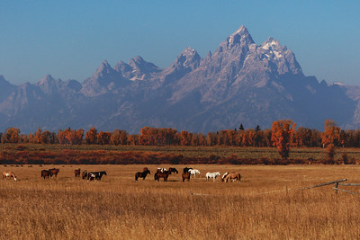 Horses in pasture at base of Teton Mountains