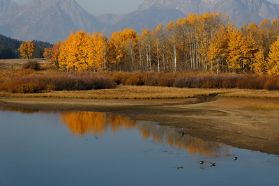 Edge of the Oxbow Bend on the Snake River