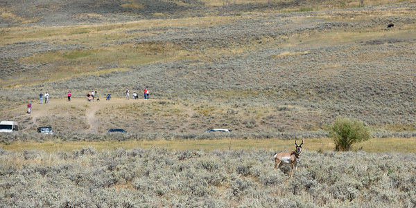 OBSERVATION POINT & PRONGHORN
