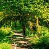 The Hoh Rainforest