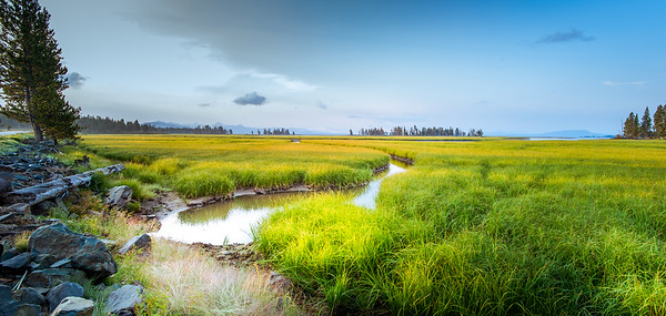 Meadow Yellowstone Park Photo