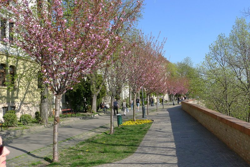 Blossom at the Castle