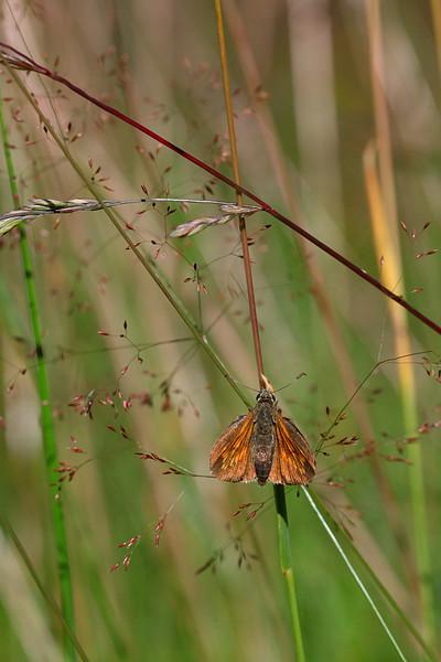 Butterfly / Бабочка