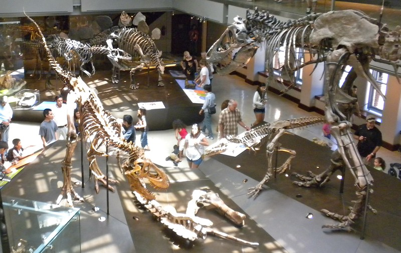 Paul and Tom visit the Natural History Museum in Los Angeles after its remodeling on Wednesday, August 3, 2011