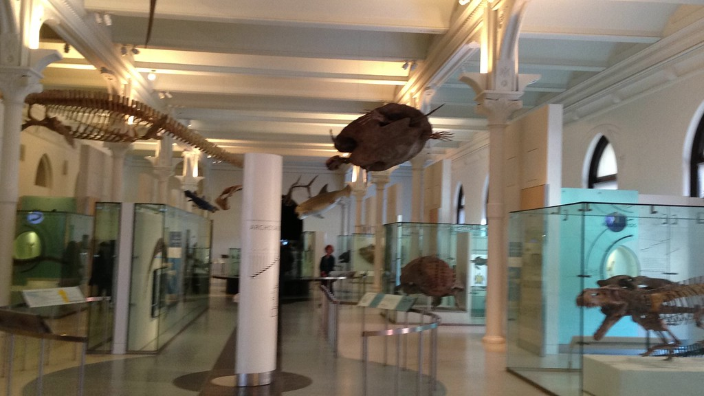 Visiting New York's Natural Historical Museum on Manhattan Island during our attendance of Paul's Carnegie Performance.
