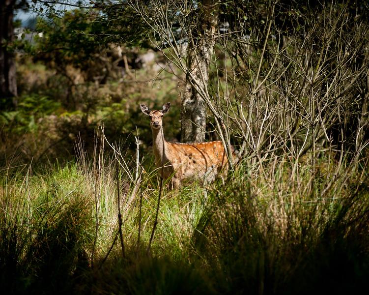Deer, Arne