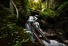 Flowing Stream. Dolomites