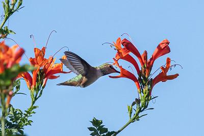 birdgarden2-6245