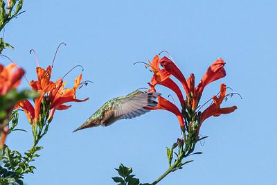 birdgarden2-6246