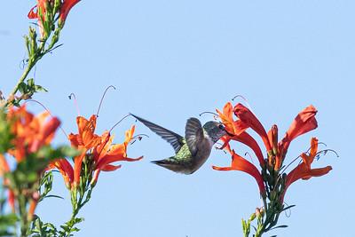 birdgarden2-6248