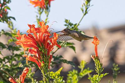 birdgarden-6094