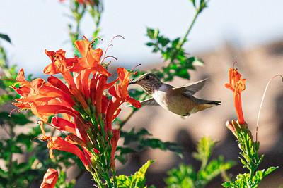 birdgarden-6091