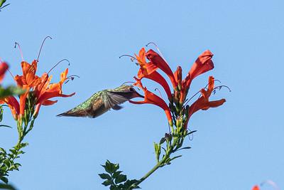 birdgarden2-6244