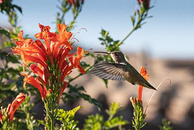 birdgarden-6095