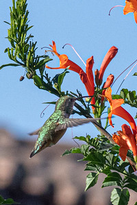 birdgarden2-6254
