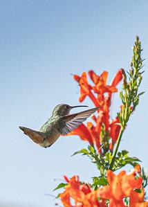 birdgarden-6105