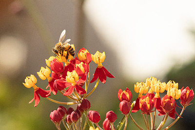 birdgarden-6137