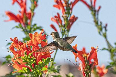 birdgarden-6085