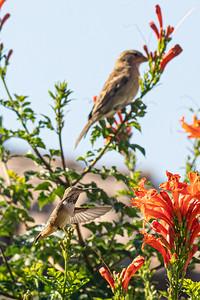 birdgarden-6101